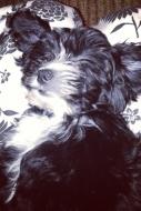 Miranda Cosgrove Puppy